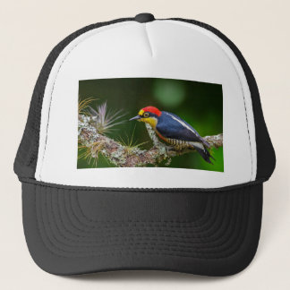A Yellow Fronted Woodpecker in Brazil Trucker Hat