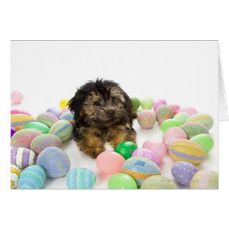 A Yorkie-poo puppy and Easter eggs. Card