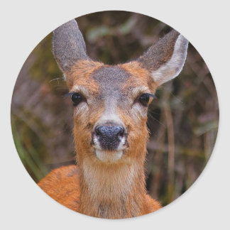 A Young Black-Tailed Deer Smiles Round Sticker