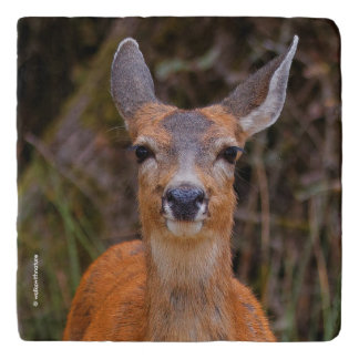 A Young Black-Tailed Deer Smiles Trivet
