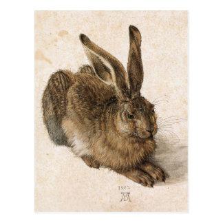 A Young Hare by Albrecht Durer Postcard