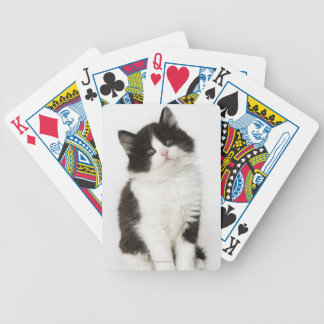 A young kitten sitting looking into the camera bicycle playing cards