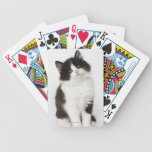 A young kitten sitting looking into the camera poker deck