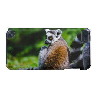 A Young Lemur, Animal Photography iPod Touch (5th Generation) Cases
