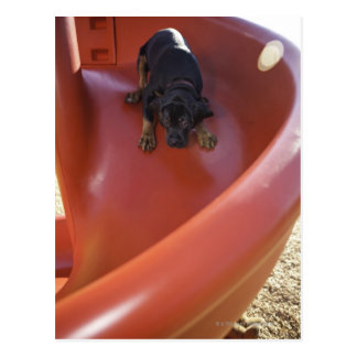 a young puppy sliding down a slide postcard