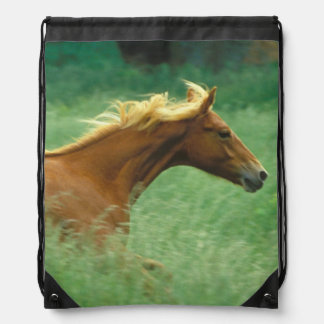 A young stallion runs through a meadow of tall drawstring backpacks