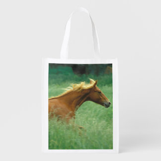 A young stallion runs through a meadow of tall market totes