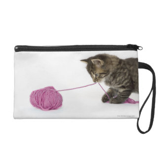 A young tabby kitten playing wristlet