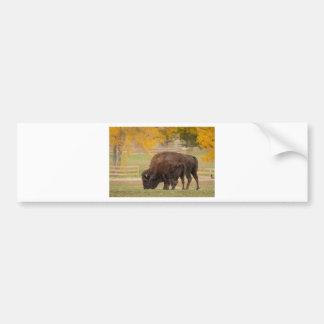 AAutumn Buffaloes Cow and Calf Bumper Sticker