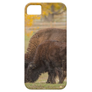 AAutumn Buffaloes Cow and Calf Case For The iPhone 5