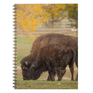 AAutumn Buffaloes Cow and Calf Notebooks