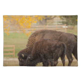 AAutumn Buffaloes Cow and Calf Placemat