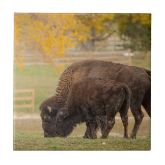 AAutumn Buffaloes Cow and Calf Tile