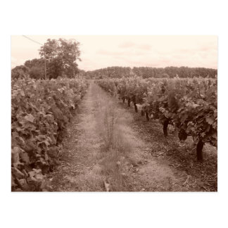 Abandoned vineyard postcard