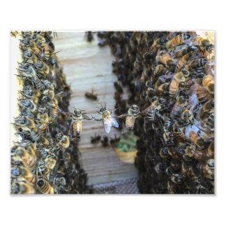 Abeilles de miel tenant des mains photos sur toile