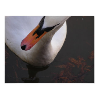 Above A Swan Poster
