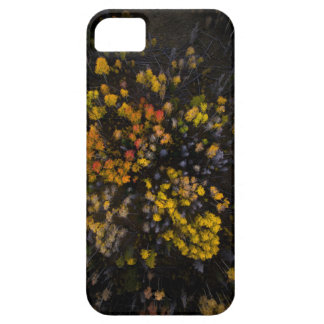Above The Tress iPhone 5 Case