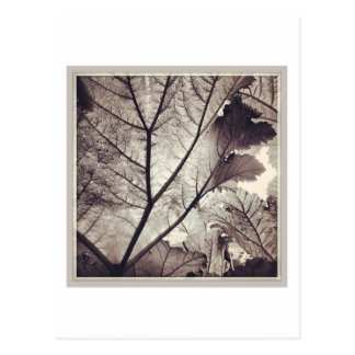 Abstract black and white foliage postcard