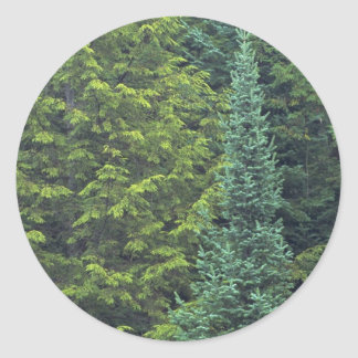 Abstract Detail of spruce and balsam fir forest Round Sticker