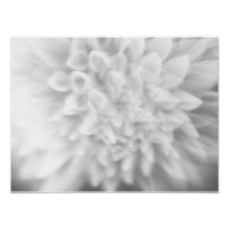 Abstract Floral Black and White Dahlia Print