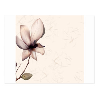 Abstract Flowers Warm Colors Pip Postcard