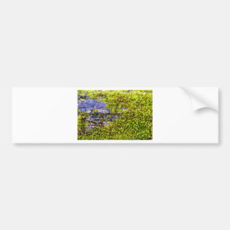 abstract green moss_on wood in winter bumper sticker