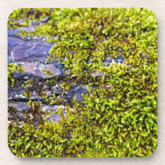 abstract green moss_on wood in winter coaster