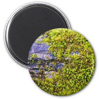 abstract green moss_on wood in winter magnet