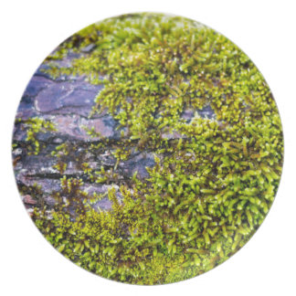 abstract green moss_on wood in winter plate
