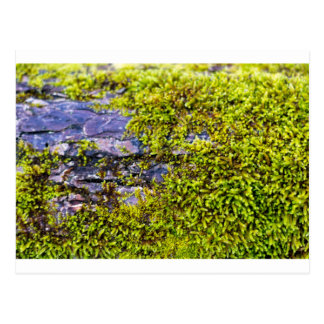 abstract green moss_on wood in winter postcard