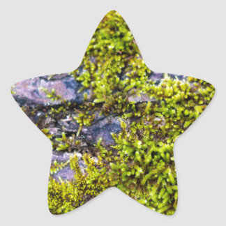 abstract green moss_on wood in winter star sticker