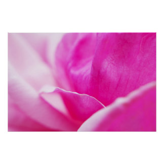 Abstract Hot Pink Flower Poster