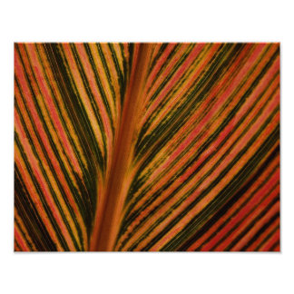 Abstract Leaf Photographic Print