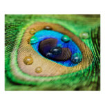 Abstract Macro Peacock Feather with Drops Poster