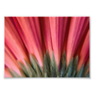 Abstract Macro Red and Pink Gerbera Flower Photo Print
