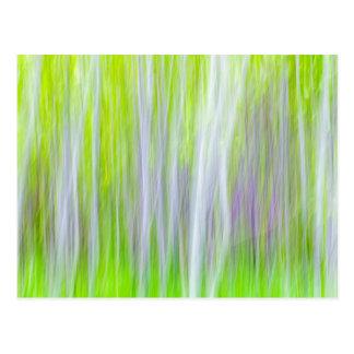 Abstract of Aspen Trees | Yakima River Trail, WA Postcard