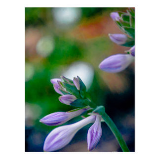 ABSTRACT OF FLORAL BUDS POSTCARD