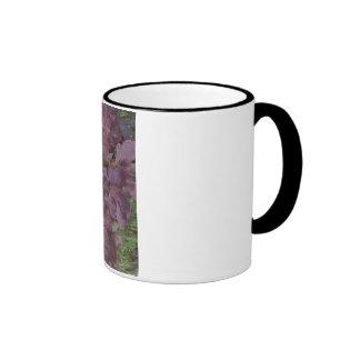 Abstract photo of a smoke bush coffee mugs