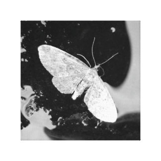 Abstract picture print moth black and white