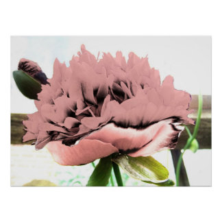 Abstract Popart Pink Rhododendron Flower Posters