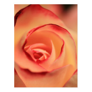 Abstract red rose eye postcard