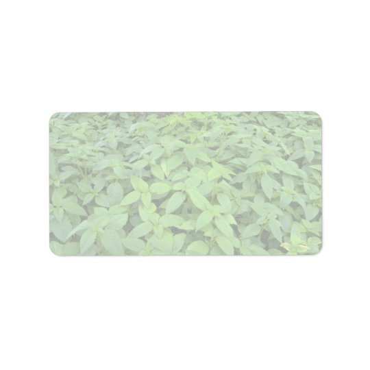 Abstract Wild mint leaves Label