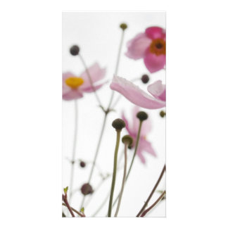 Abstract Wildflowers Photo Card Template