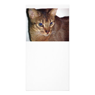 Abyssinian 2.png photo card template