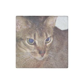 Abyssinian 2.png stone magnets