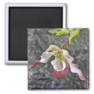 AC- Lady Slipper Orchid Magnet