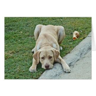 AC- Yellow Labrador Puppy Notecards Card