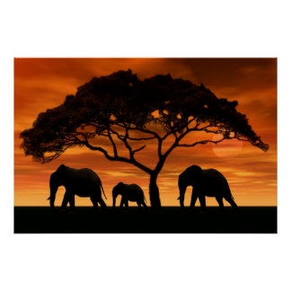 Acacia Elephant Sunset Poster