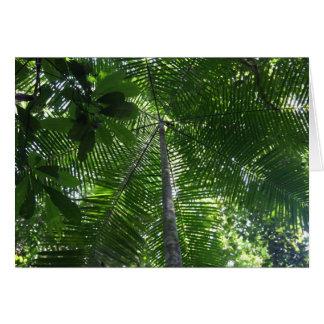 Acai palm tree greeting card