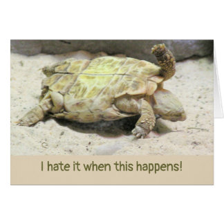 ACCIDENT HIUMOR/TURTLE TURNED ON ITS BACK CARD